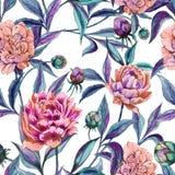 La peonía colorida hermosa florece con las hojas verdes y de la púrpura en el fondo blanco Modelo floral inconsútil Pintura de la Imagenes de archivo