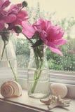 La peonía florece en botellas de leche en la ventana foto de archivo