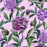 La peonía púrpura hermosa florece con las hojas verdes en fondo rosado Modelo floral inconsútil Pintura de la acuarela stock de ilustración