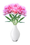 La peonía rosada hermosa florece en el florero blanco aislado en blanco Fotografía de archivo libre de regalías