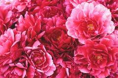 La peonia rosa fiorisce il fondo Fotografia Stock