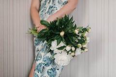 La peonia sveglia ed adorabile fiorisce in mani del ` s delle donne Molti petali stratificati Fondo grigio chiaro dei fiori bianc Immagine Stock Libera da Diritti