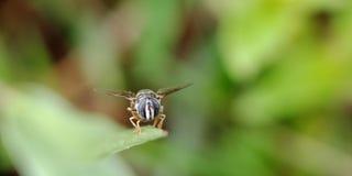 La pequeña abeja Foto de archivo