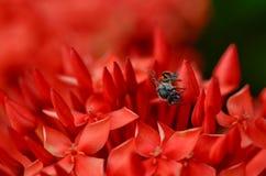 La pequeña abeja Foto de archivo libre de regalías