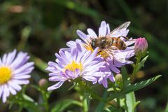 La pequeña avispa que se sienta en una flor Fotografía de archivo libre de regalías