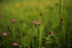La pequeña avispa se sienta en la flor Foto de archivo