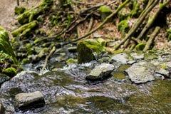La pequeña cala atraviesa un bosque verde imagen de archivo libre de regalías