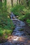 La pequeña cala cerca de Multnomah cae Oregon Foto de archivo