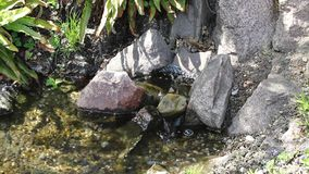 La pequeña cascada del arroyo se relaja almacen de video