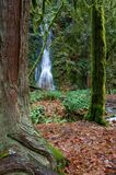 La pequeña cascada fluye sobre un acantilado enmarcado por los árboles Foto de archivo