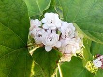 La pequeña flor blanca Fotografía de archivo