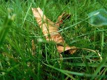 La pequeña hoja en hierba Imagenes de archivo