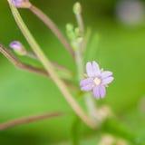 La pequeña mala hierba Fotografía de archivo