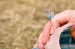 La pequeña mariposa hermosa se sienta en una mano de la muchacha imágenes de archivo libres de regalías