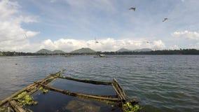 La pequeña multitud de pájaros vuela y se zambulle para los pequeños pescados como comida en el agua metrajes