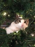 La pequeña Navidad del gato fotografía de archivo