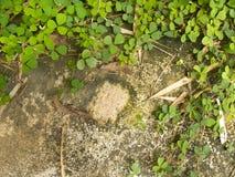 La pequeña planta crece en la tierra con el espacio Imagen de archivo libre de regalías