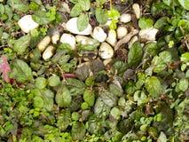 La pequeña planta crece en la tierra con la roca blanca Imágenes de archivo libres de regalías