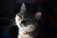 La pequeña princesa, Susi Q fotografía de archivo