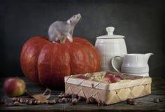 La peque?a rata gris linda se sienta en una calabaza amarilla grande Todav?a vida en estilo del vintage con una rata viva S?mbolo