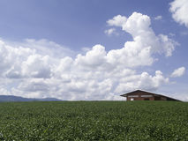 La pequeños casa y té rojos cultivan en fondo de muchas nubes Fotos de archivo libres de regalías