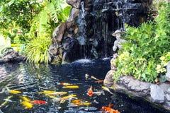 La pequeña charca con una cascada y las carpas del koi pesca Foto de archivo libre de regalías