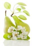 Pere e fiore Immagini Stock