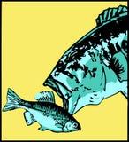 La perca americana ataca los pequeños pescados - vector Imagenes de archivo