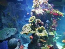 La perfection de la mer photos stock