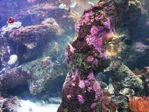 La perfection de la mer photo libre de droits