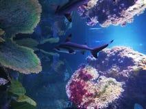 La perfection de la mer images stock