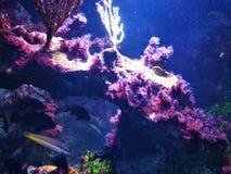 La perfection de la mer photos libres de droits