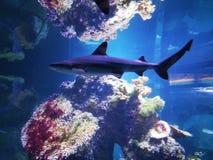 La perfection de la mer images libres de droits
