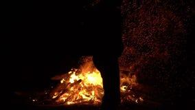 La persona lanza un árbol en el fuego grande holiday almacen de metraje de vídeo