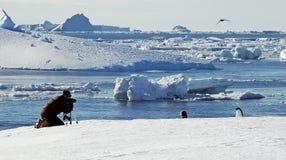 La persona toma las fotos del pingüino en Ant3artida Imágenes de archivo libres de regalías