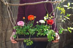 La personne tient le pot de fleurs images stock