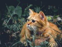 La perspectiva del animal doméstico imagenes de archivo
