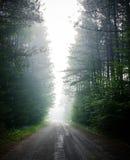 La perspectiva monopunto abajo empaña el camino obscurecido, bosque-alineado Imagen de archivo libre de regalías