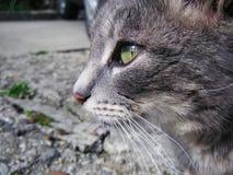 La perspective du chat Photo libre de droits