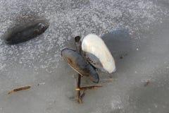 La pertica delle coperture dei bivalve si trova sul ghiaccio di un lago congelato immagine stock