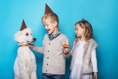 La petite belle fille et le garçon beau avec le chien célèbrent l'anniversaire Amitié famille Portrait de studio au-dessus de fon Image stock