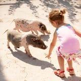 La petite fille alimente de petits porcs Photo stock
