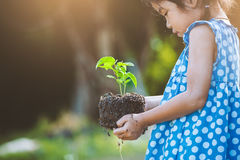 La petite fille asiatique tenant le jeune arbre pour préparent l'usine sur la terre Photos libres de droits