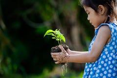 La petite fille asiatique tenant le jeune arbre pour préparent l'usine sur la terre Photo libre de droits