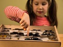 La petite fille contrôle la collection d'entomologie de papillons tropicaux images libres de droits