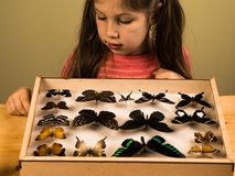 La petite fille contrôle la collection d'entomologie de papillons tropicaux photographie stock