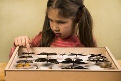 La petite fille contrôle la collection d'entomologie de papillons tropicaux photographie stock libre de droits