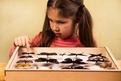 La petite fille contrôle la collection d'entomologie de papillons tropicaux photos libres de droits