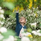 La petite fille déchire des fleurs des arbres dans un jardin de floraison Image libre de droits