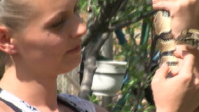 La petite-fille de Margarita Nazarova plus docile célèbre avec un jeune python en Bulgarie clips vidéos